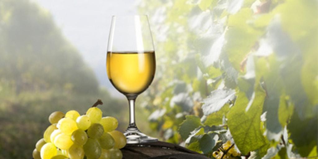 Alles was Sie für Ihren Weinhandel brauchen